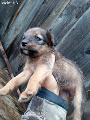 Кученца търсят нов дом