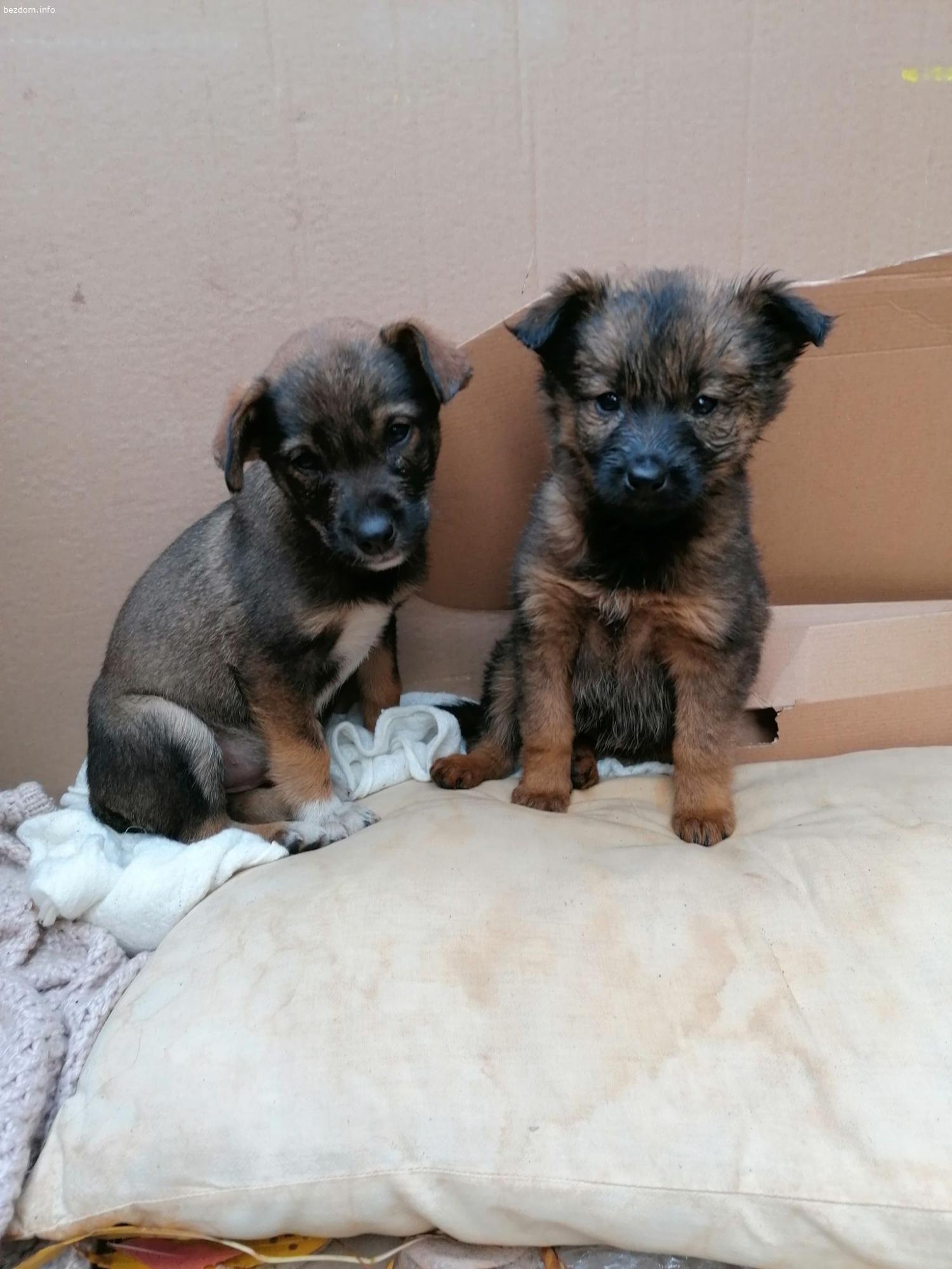 СПЕШНО се търси дом за бебе кученце