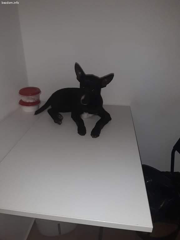 Изгубено мъжко куче