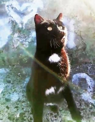 Вероятно изгубена красива  черна котка