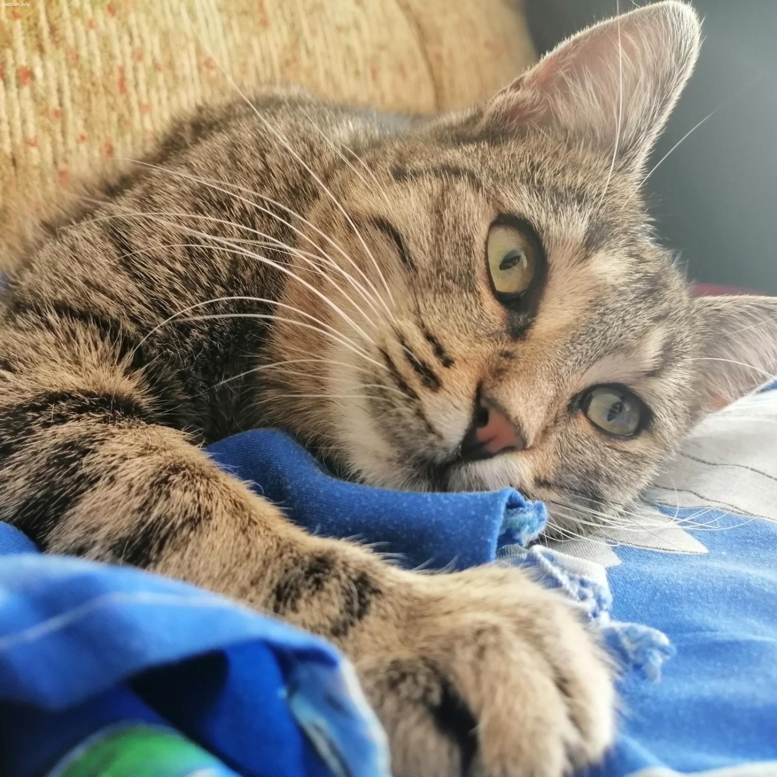 Спешно търси дом женско коте