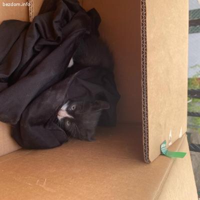 Намерени котета