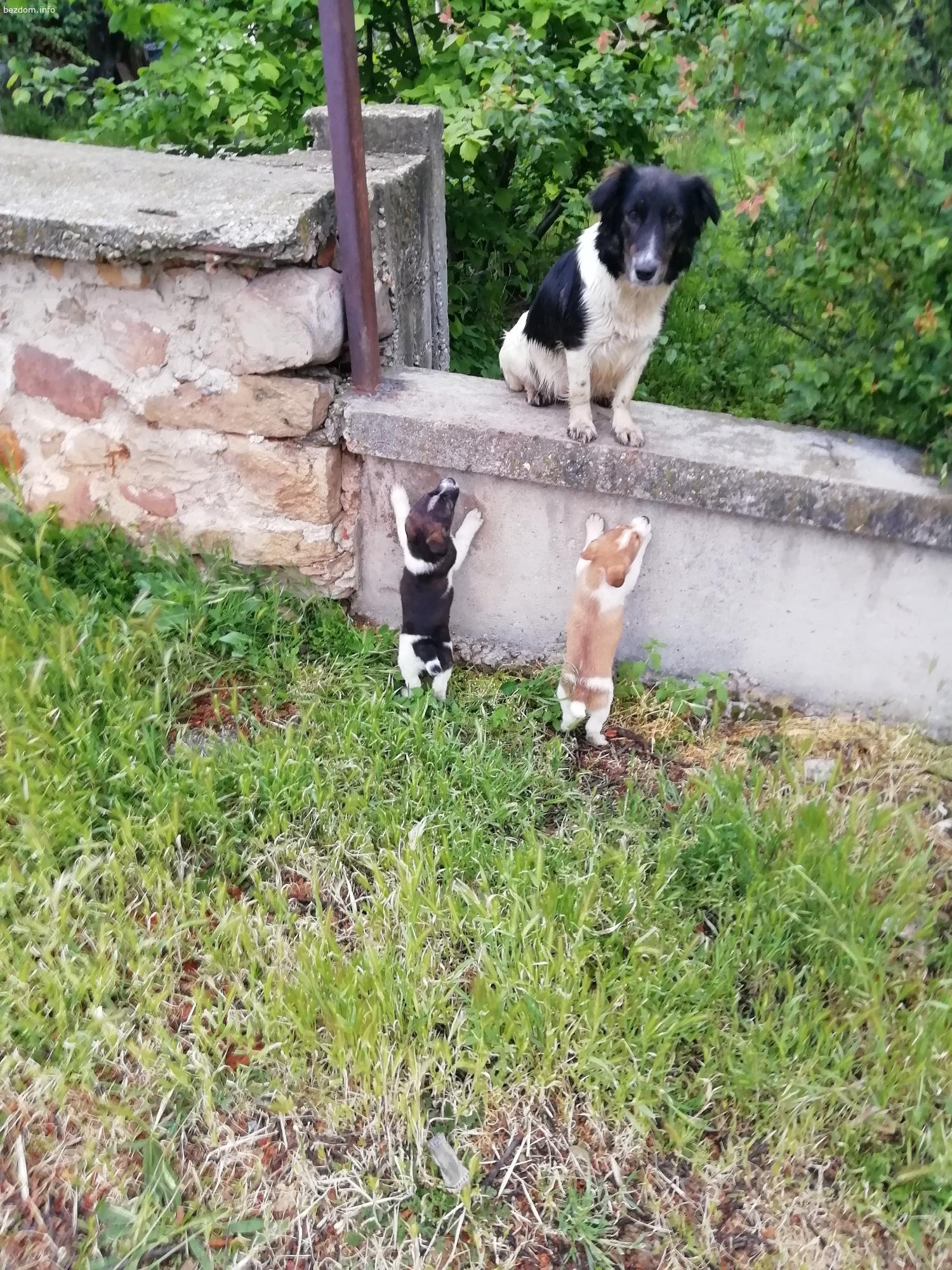 Бездомни бебенца- кучета