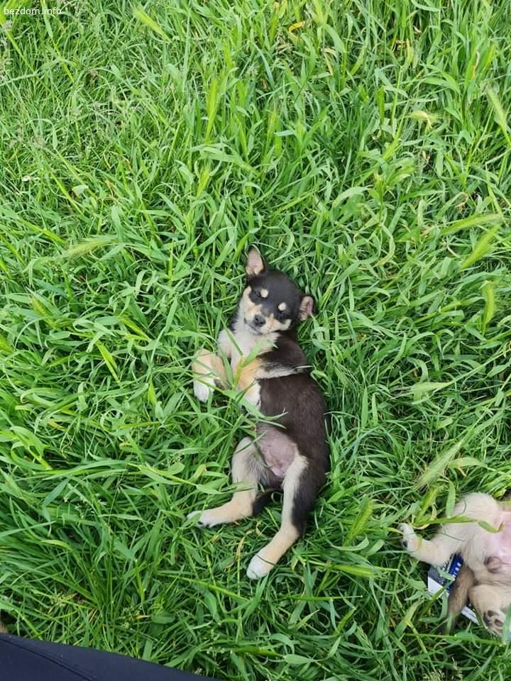 Намерени кученца захвърлени в чувал