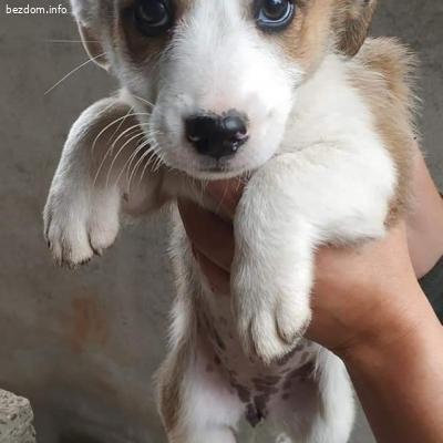 Бебенца кученца търсят дом