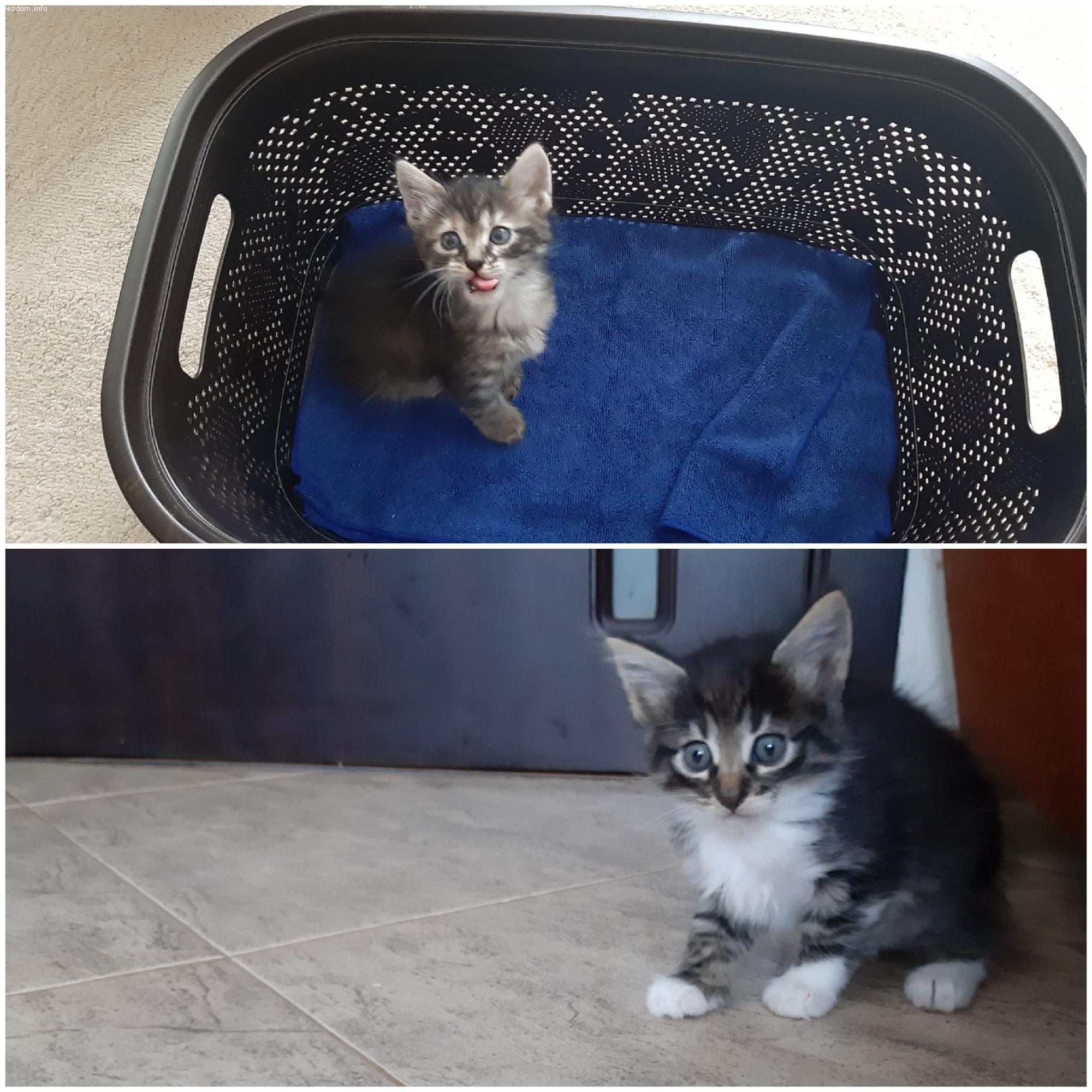 Подарявам две малки котета!