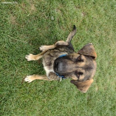 Спасено кученце търси дом