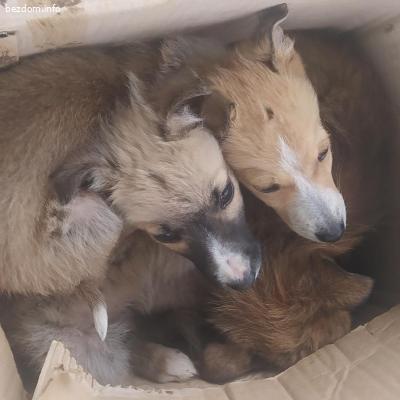 Кученца търсят дом