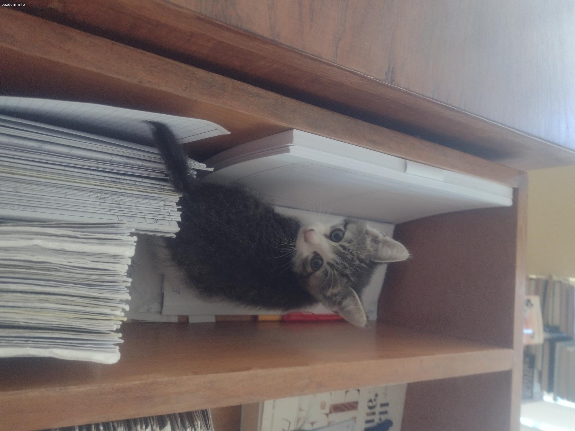 Малко коте