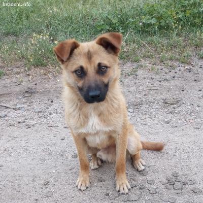 Куче за осиновяване
