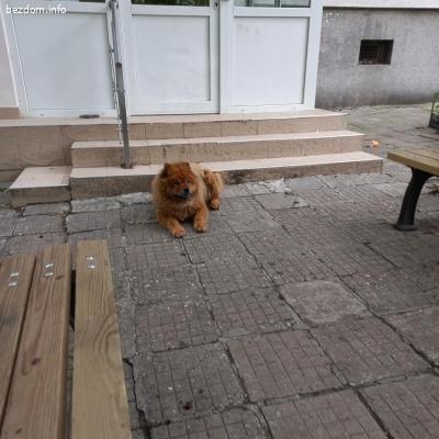 Изоставено или изгубено куче