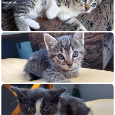 Подарявам бебета котета