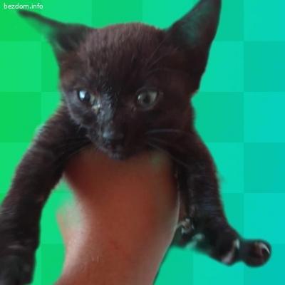 Подарявам малко котенце, бъдеща КРАСАВИЦА