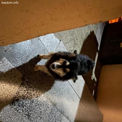 Кученце търси дом