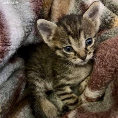Дом за бебе коте