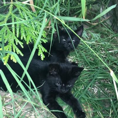 Две малки котета търсят дом