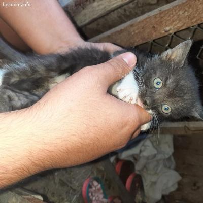 Котета търсят своя дом