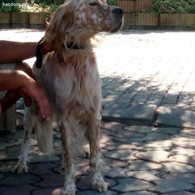 Намерено ловно куче в с. Старо Оряхово