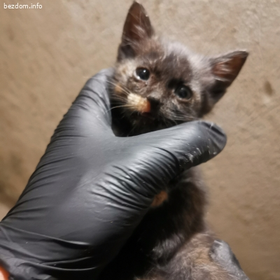 Коте спешно търси дом