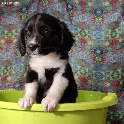 Красиви малки кученца търсят своите хора