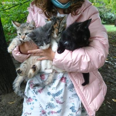 Котенца търсят дом (София)