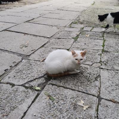 Най - милото гальовно коте (Белушка)