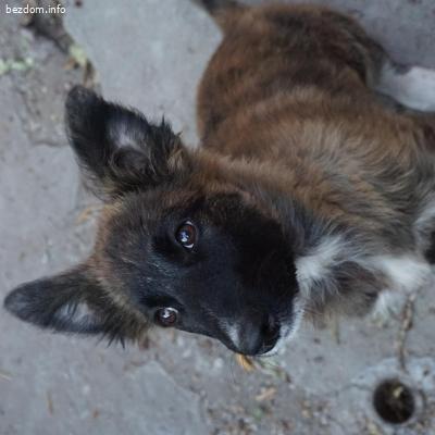 Куче в БАР търси ОБРАЗЦОВ дом