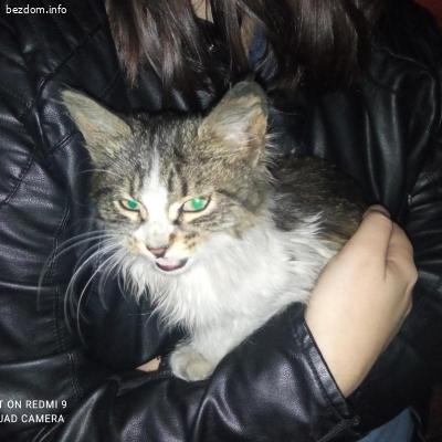 Мъжко котенце търси дом