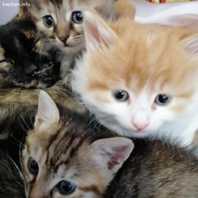 Подаряеам котенца на любящи стопани