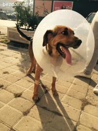 История за едно бездомно куче блъснато от кола