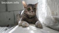Изгубена котка!! Помощ!