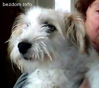 Изгубено бяло куче на кафяви петна