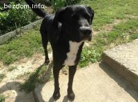 Изгубено черно мъжко куче