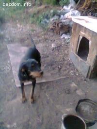 Изгубено е ловно куче