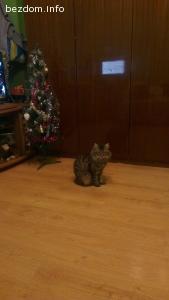 изгубено котенце в Плевен