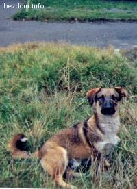 Изгубено куче Надежда 4