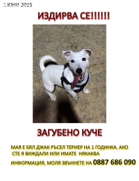 Изгубено куче в Хасково,кв. Младежки хълм