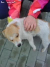 изгубено кученце