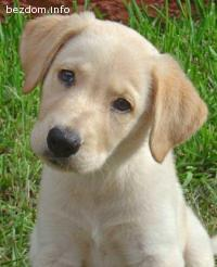 Изгубено малко бежово кученце до Халите