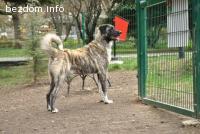 Изгубено / откраднато овчарско куче