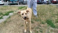 Изгубено женско куче, София
