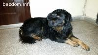 Изоставено куче търси нов стопанин