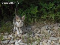 Коте, мило и игриво, търси своя дом и любящи стопани