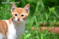 Коте Мишкун търси своите хора