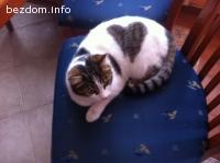 Коте със сърчице търси дом