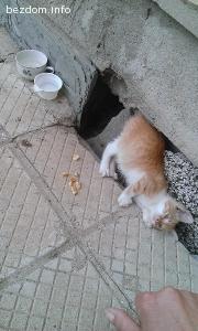 Коте се нуждае от дом