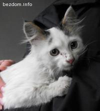 Котето намери дом