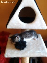 Коте търси любящи стопани!
