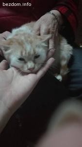 Коте търси приемен дом