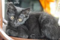 Котенце с късмет- търси дом